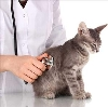 Ветеринарные клиники в Озерах